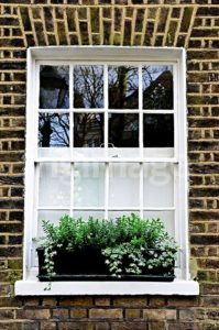 Image of a white sash window with window box brimming with green plants