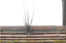 Plants growing out of a tiled roof